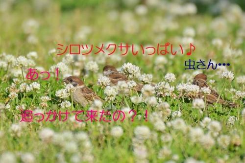 030_201605261926201c5.jpg