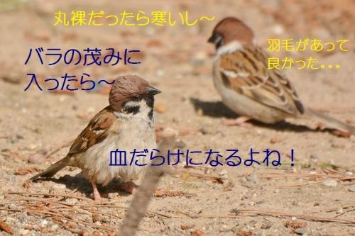 030_20160529004824bea.jpg