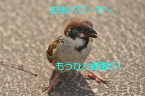 030_20160623182451677.jpg