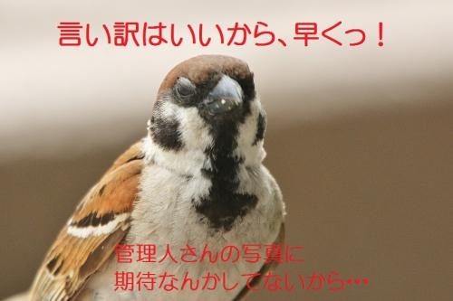 030_20160624173822f8d.jpg