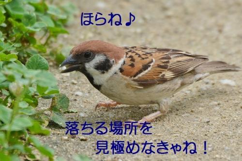 030_20160802195142515.jpg