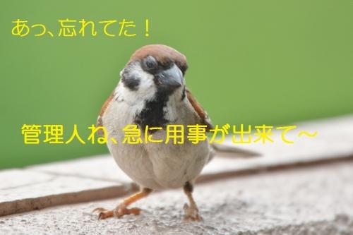 030_20160813223608846.jpg