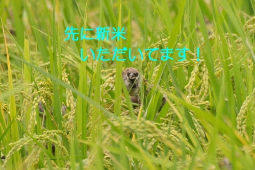 030_201609242038487fa.jpg