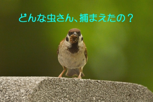 037_201608052104531c7.jpg