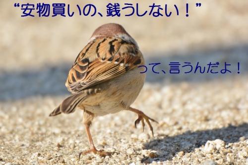 040_201604172156197c8.jpg