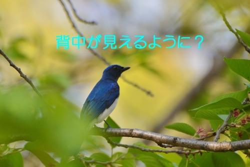 040_20160427190708b3a.jpg