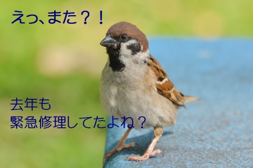 040_201605052057341c9.jpg