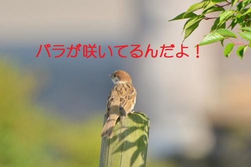 040_20160526192621c51.jpg