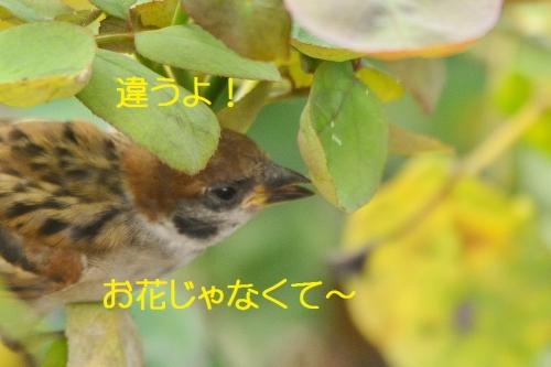 040_20160713212809341.jpg