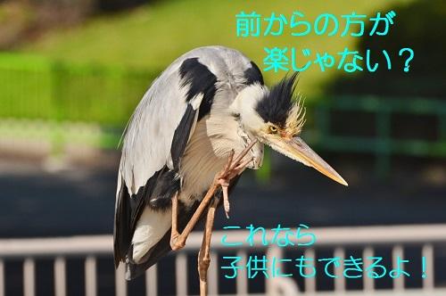 040_20160720194036076.jpg