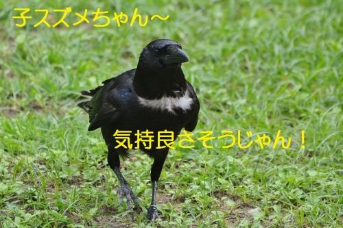 040_20160806210631abc.jpg