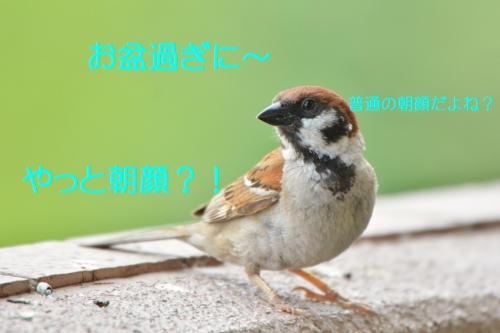040_20160819195324da6.jpg