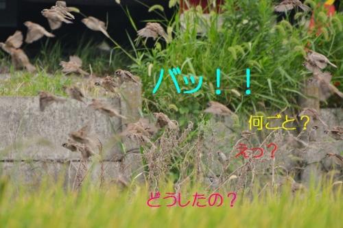 040_20160924203850e0b.jpg