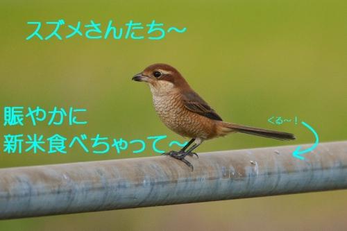 040_20160930192753ea9.jpg