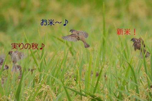 040_20161010130539acf.jpg