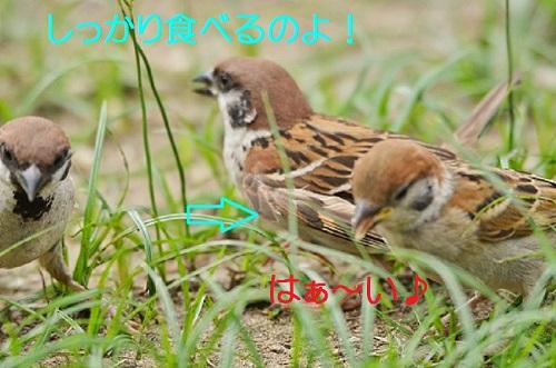 043_20161006191046a38.jpg