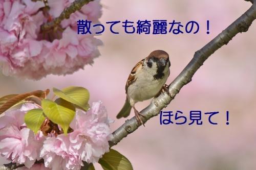 050_201604221934422fa.jpg