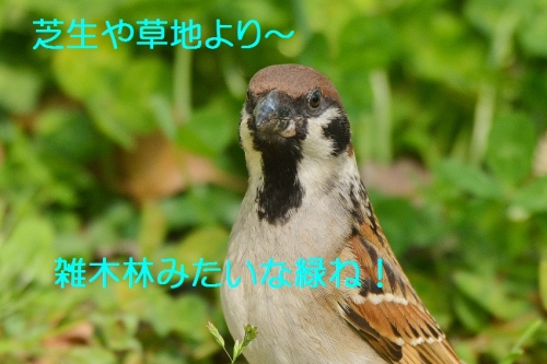 050_2016042619130147e.jpg