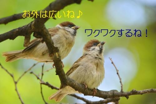 050_20160514222041bf6.jpg