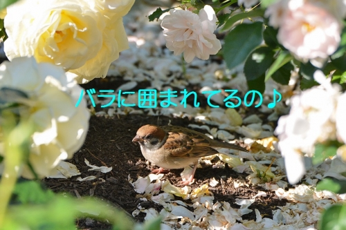 050_20160603200104d00.jpg