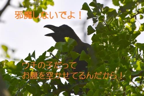 050_2016060519404015a.jpg