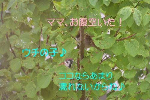 050_20160616192805536.jpg