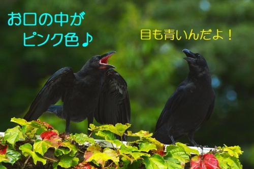 050_20160723201115321.jpg