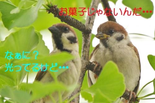 050_2016081619212609b.jpg