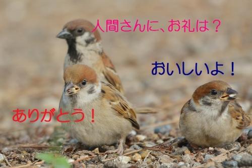 050_2016081819181280b.jpg