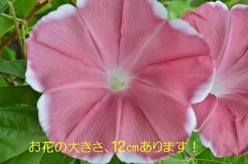 050_20160819195325a91.jpg