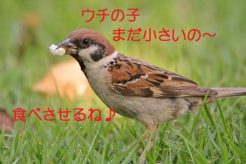 050_201609012114389ff.jpg