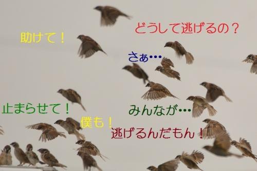 050_201609242038510da.jpg