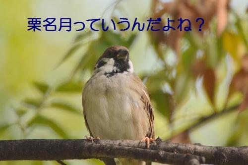 050_201610122008355f8.jpg