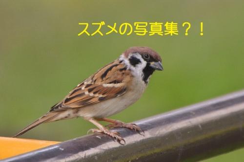 055_20161013203204f5e.jpg