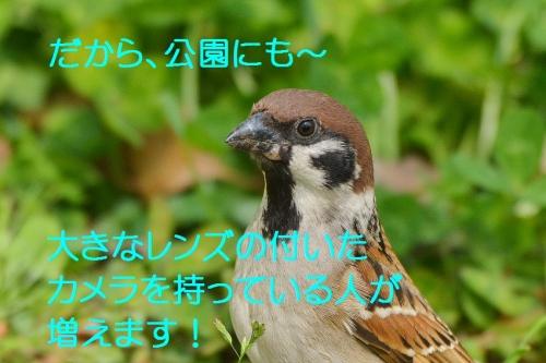 060_20160426191303c2e.jpg