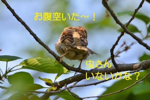 060_20160427190742cf0.jpg
