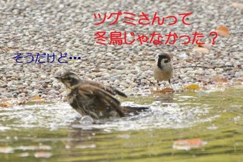 060_2016042819184641d.jpg