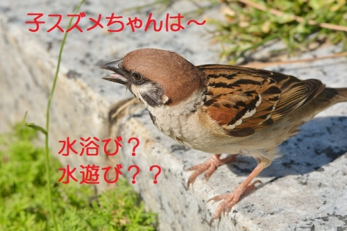 060_20160524192159e37.jpg