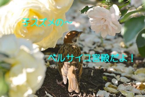 060_20160603200133961.jpg