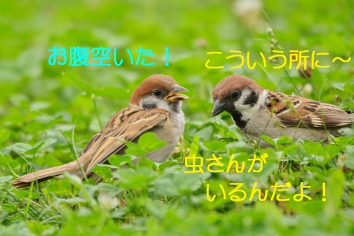 060_20160801215841ab1.jpg