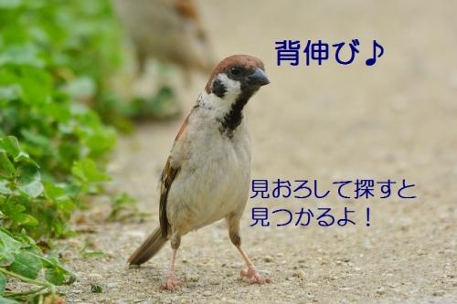 060_20160802200137738.jpg