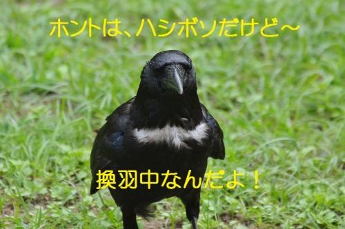 060_201608062107036c3.jpg