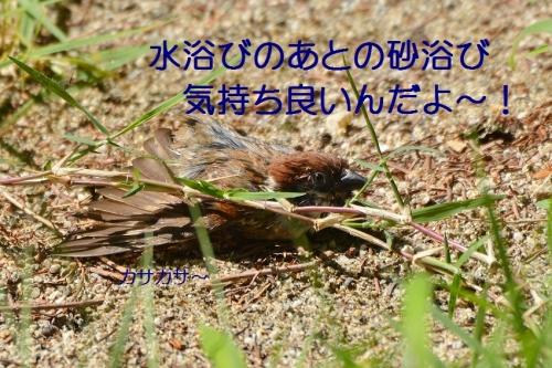 060_20160809190601ea6.jpg