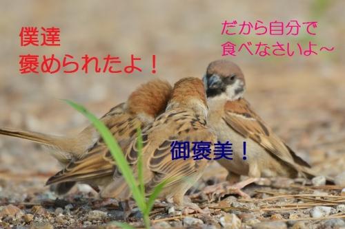 060_2016081819185240d.jpg