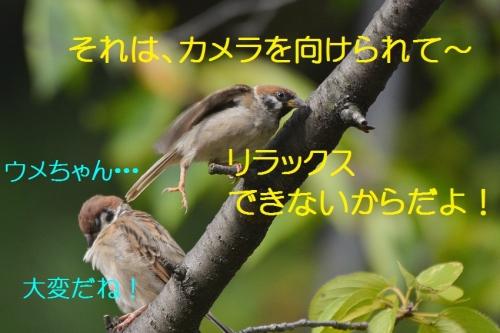 060_201609172104338f0.jpg