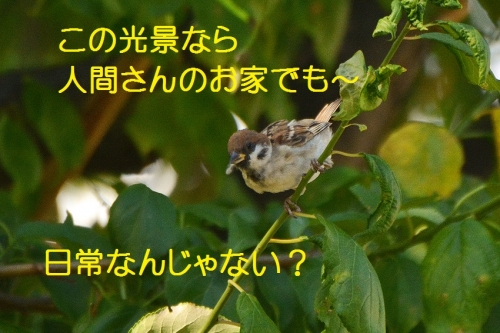 060_2016092120030501e.jpg