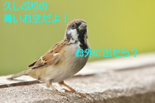 060_2016092618082629b.jpg