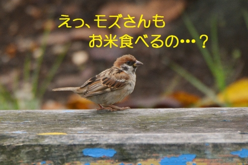 060_201609301929451b1.jpg