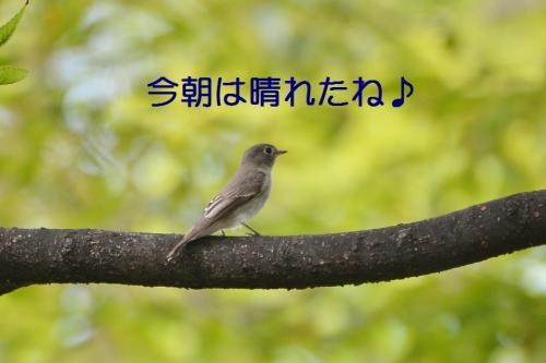060_201610022000331d0.jpg