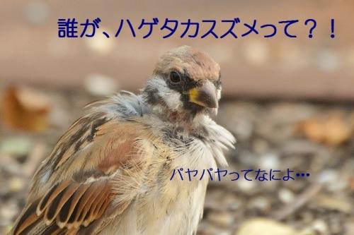 060_20161005193843fff.jpg